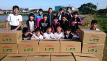 中名小学校6年生と共にレタス収穫